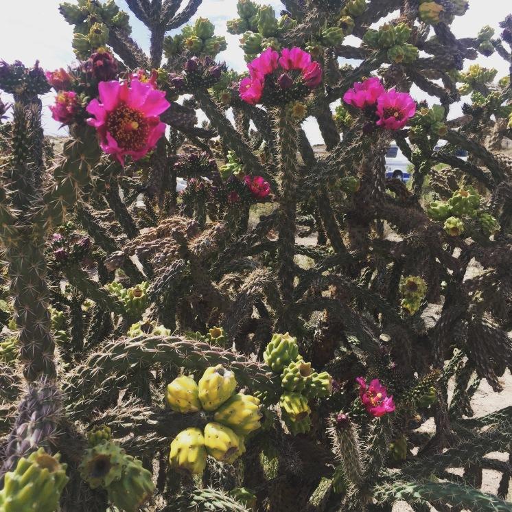 Cacti #1